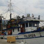 makarska prodej ryb